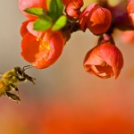 Pollination by Louise Docker